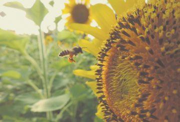 Co zabija pszczoły