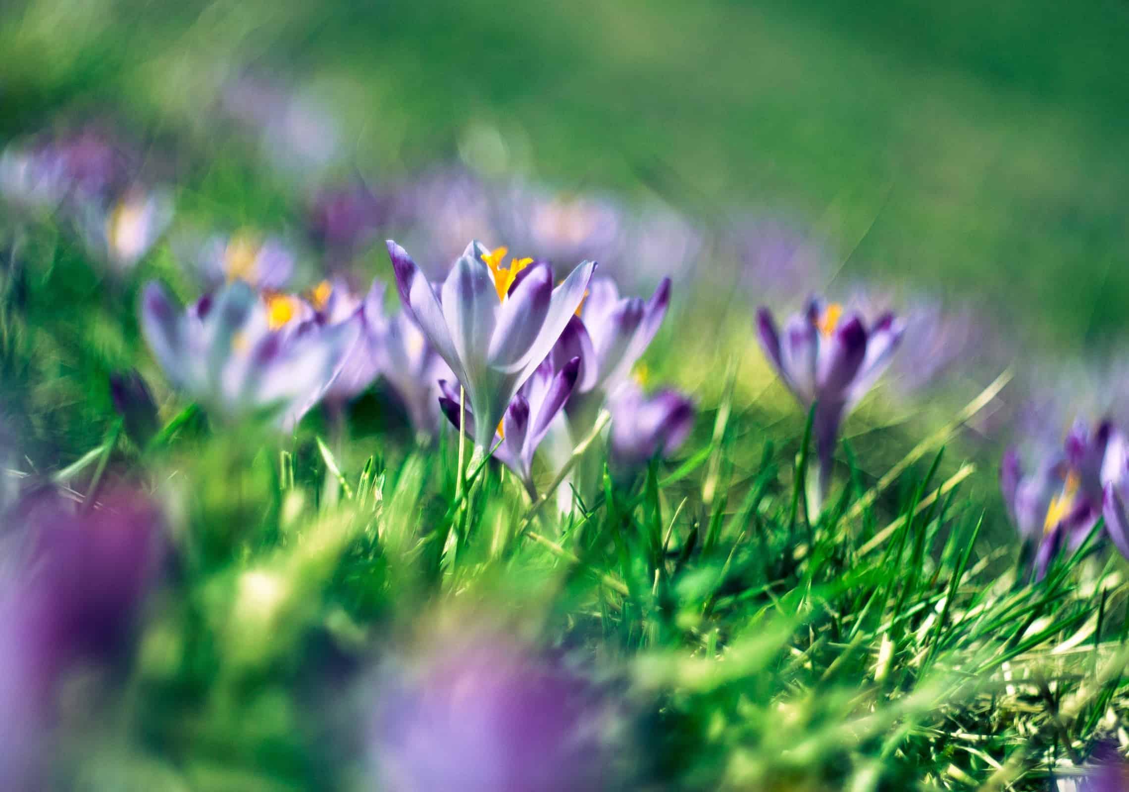 dlaczego nie wyrywamy kwiatów