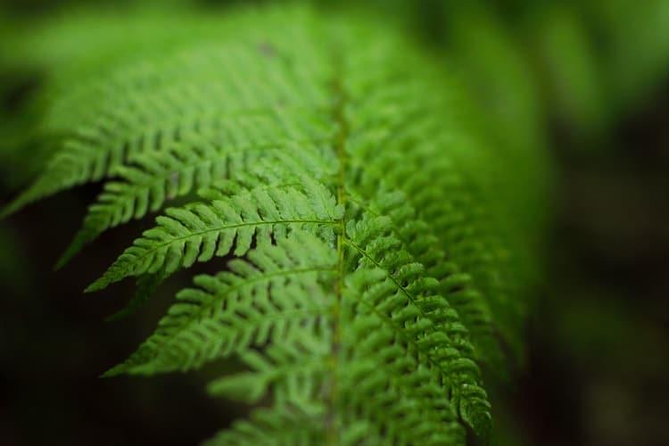 rośliny poprawiają stan powietrza