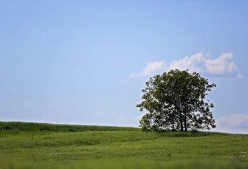 Wycinka drzew na prywatnej posesji możliwa bez zezwolenia