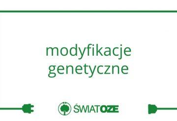 modyfikacje-genetyczne