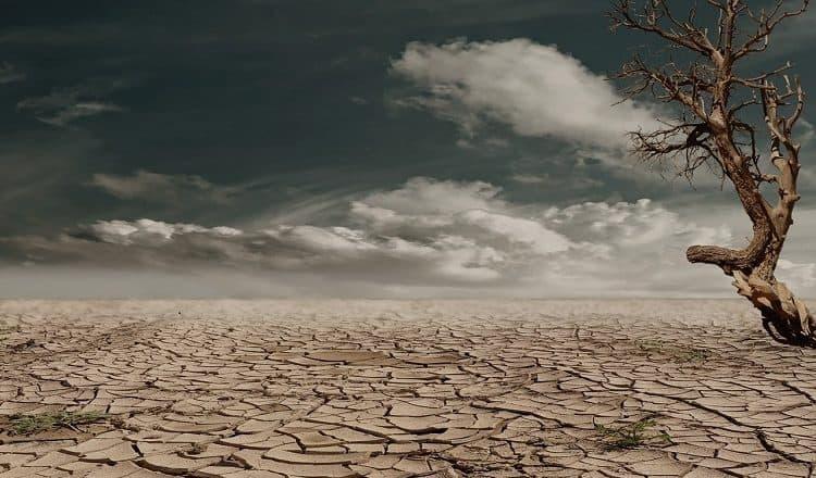pustynnienie