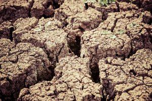 degradacja środowiska