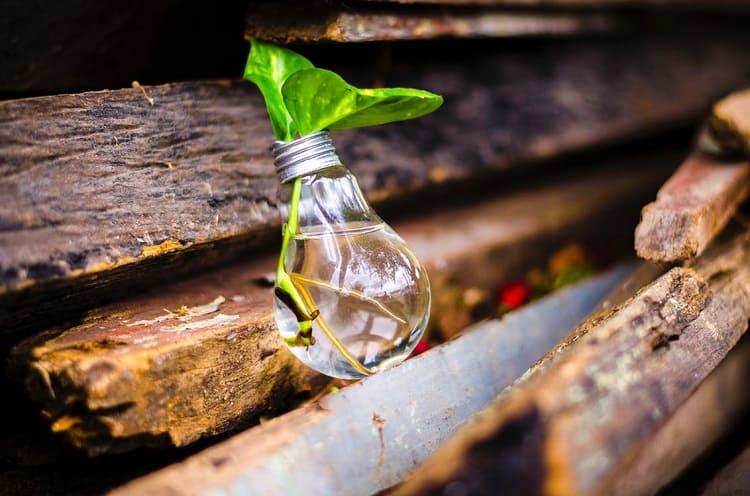 rośliny-energia