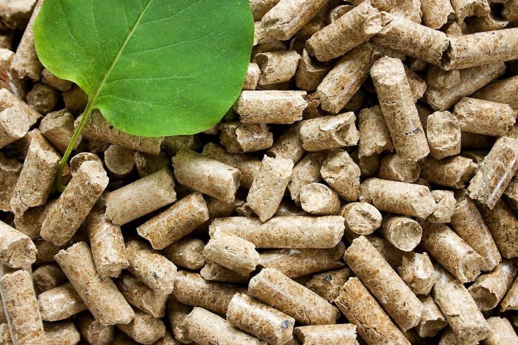 biomasa jako OZE