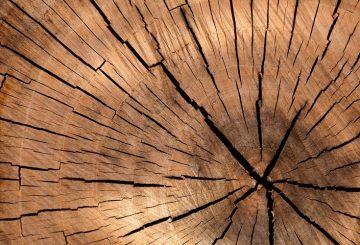 drewno biopaliwa