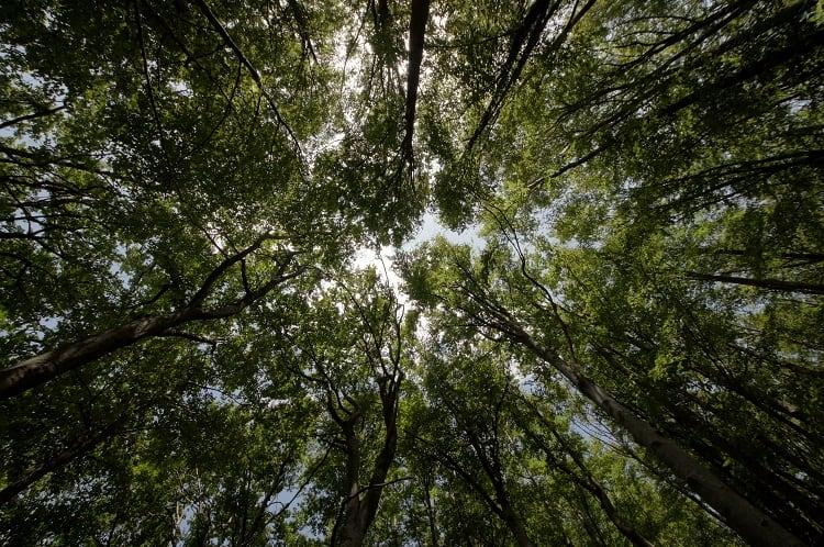 spacer-w-koronach-drzew.