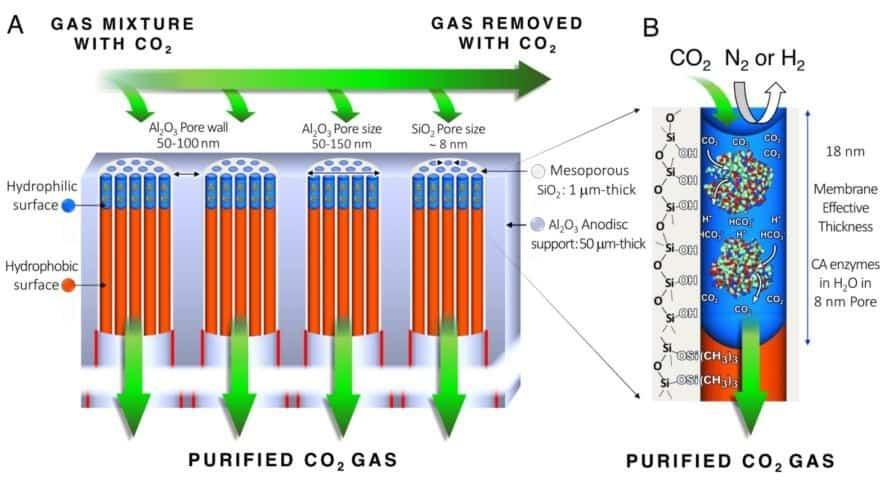Membrane, memzyme, carbon dioxide capture, CO2 capture, science, carbon dioxide, greenhouse gas