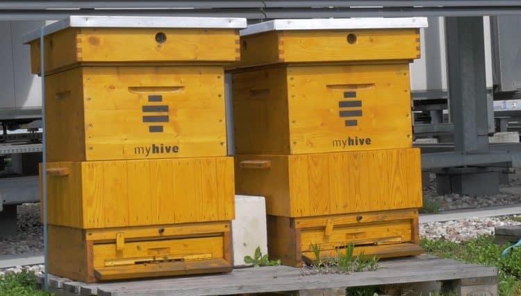 pszczoły na dachu warszawskiego biurowca