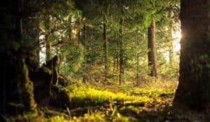 Las, ochrona środowiska
