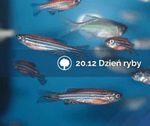 dzien ryby