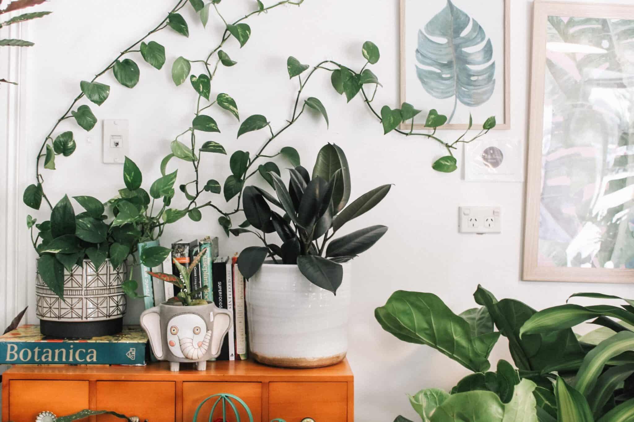 rosliny oczyszczajace powietrze